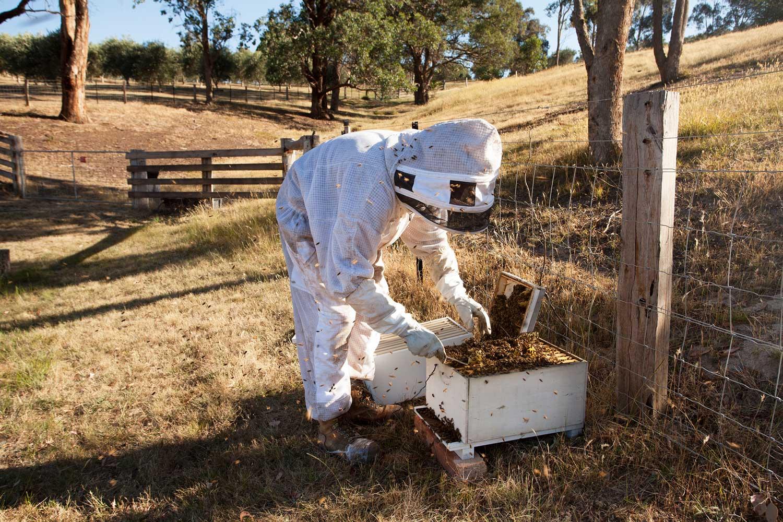 Bees_01_web.jpg