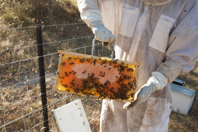 Bees_05_web.jpg