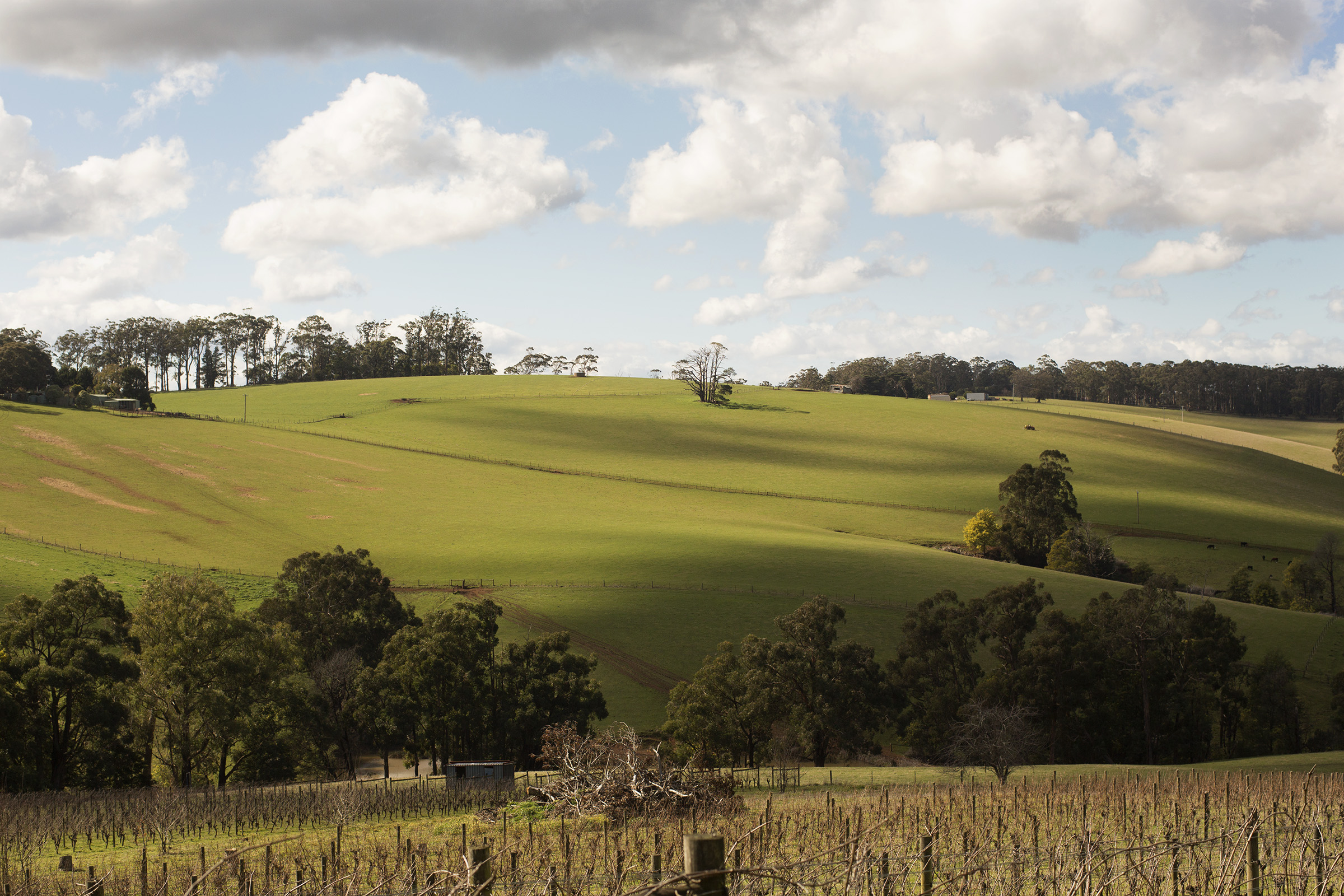 Seasoned Spring Dinner with Jayden Ong at The Stables at Stones of the Yarra Valley