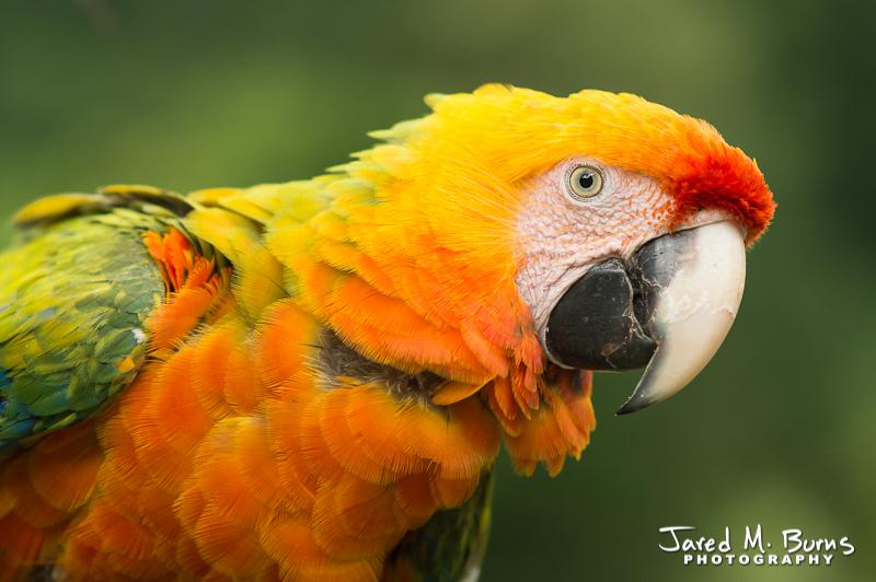 Snohomish Photographer - Parrot.jpg
