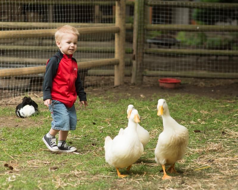 Boy following ducks.jpg