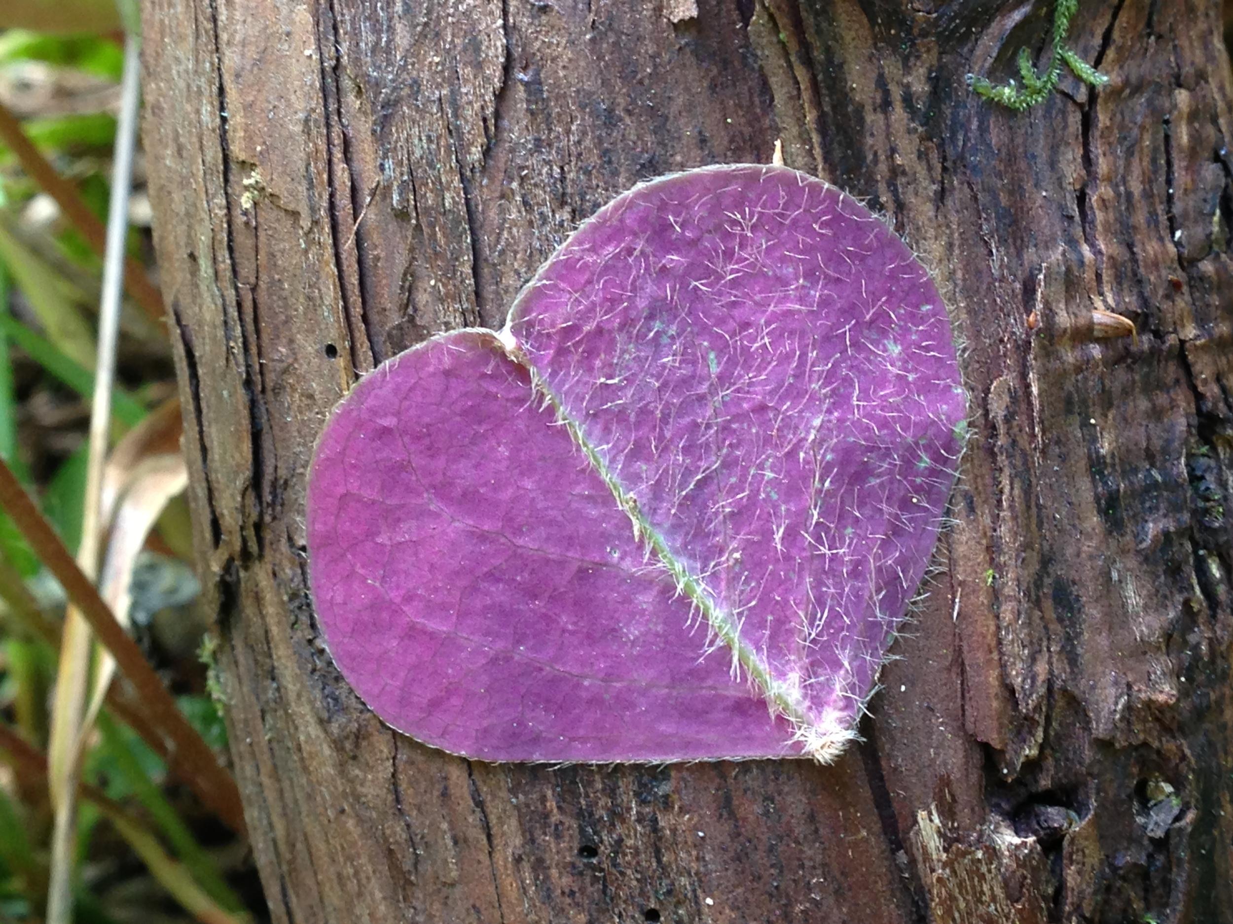 My leaf.JPG
