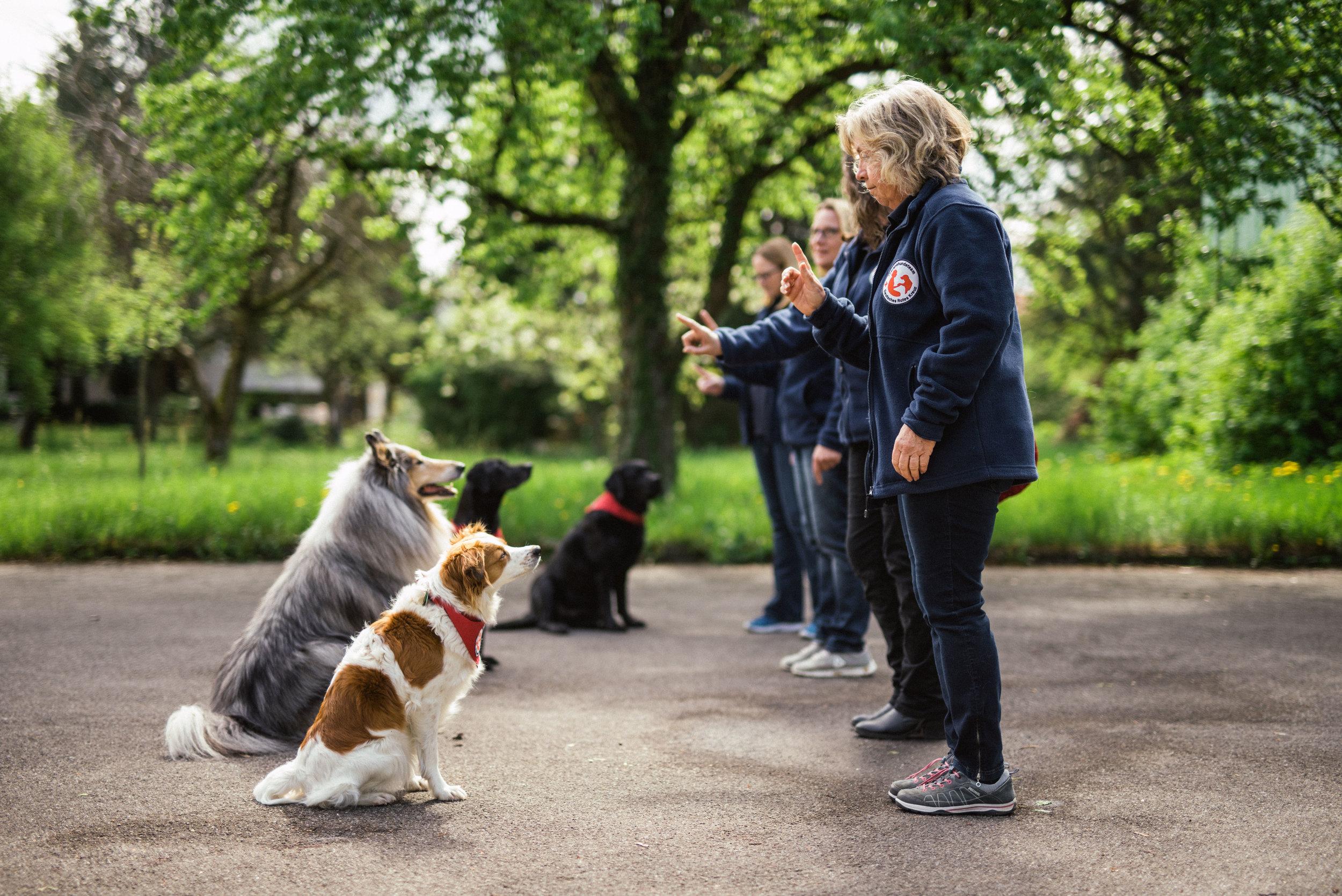 therapiehunde drk - phjsw - 6554.jpg