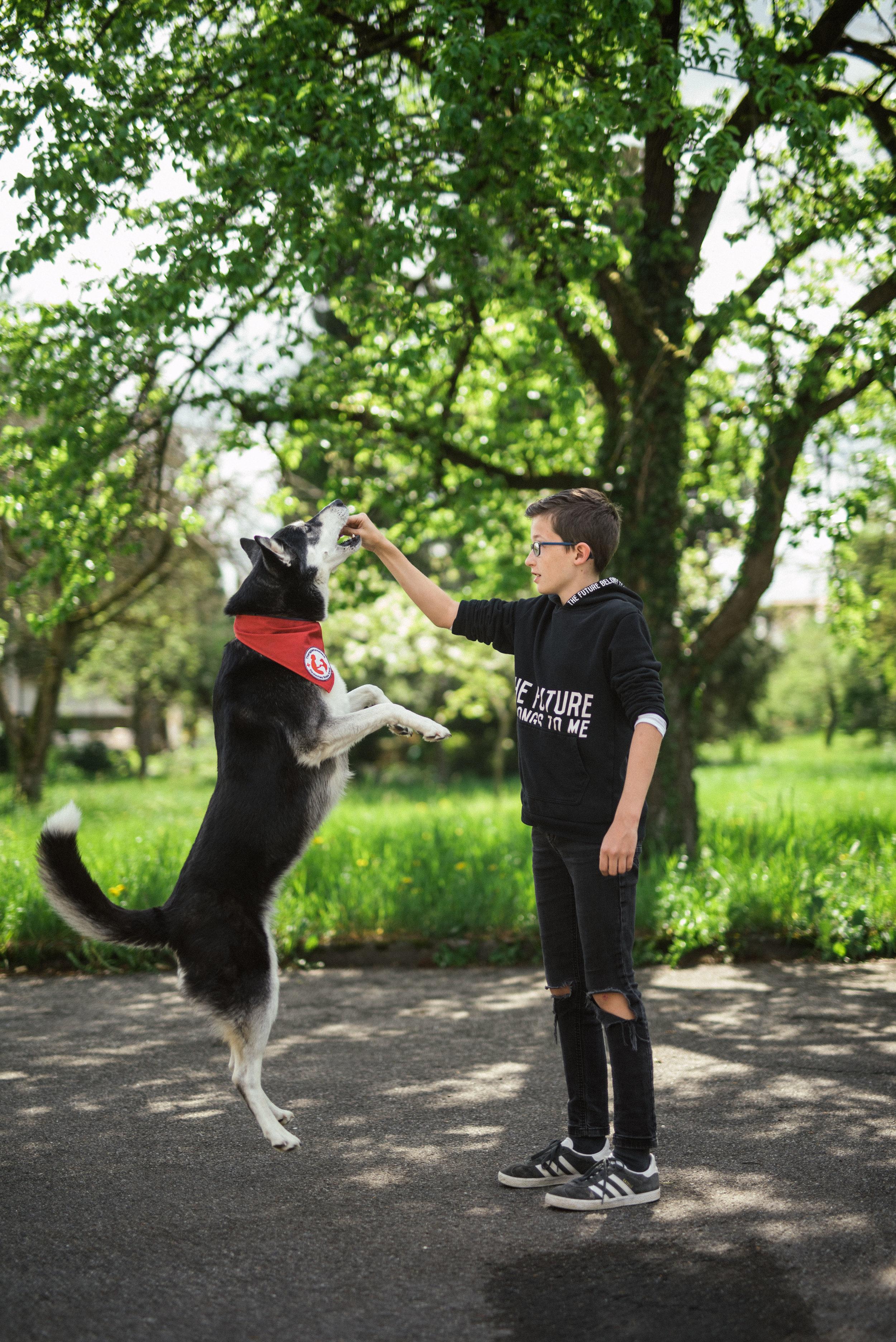 therapiehunde drk - phjsw - 6706.jpg