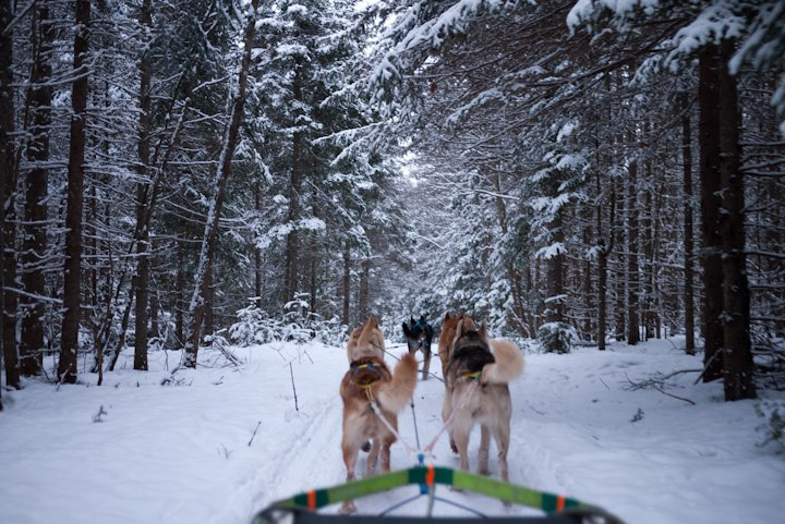 I was thrilled to try dog sledding a few years ago (and I've got another session booked this year). Mush!