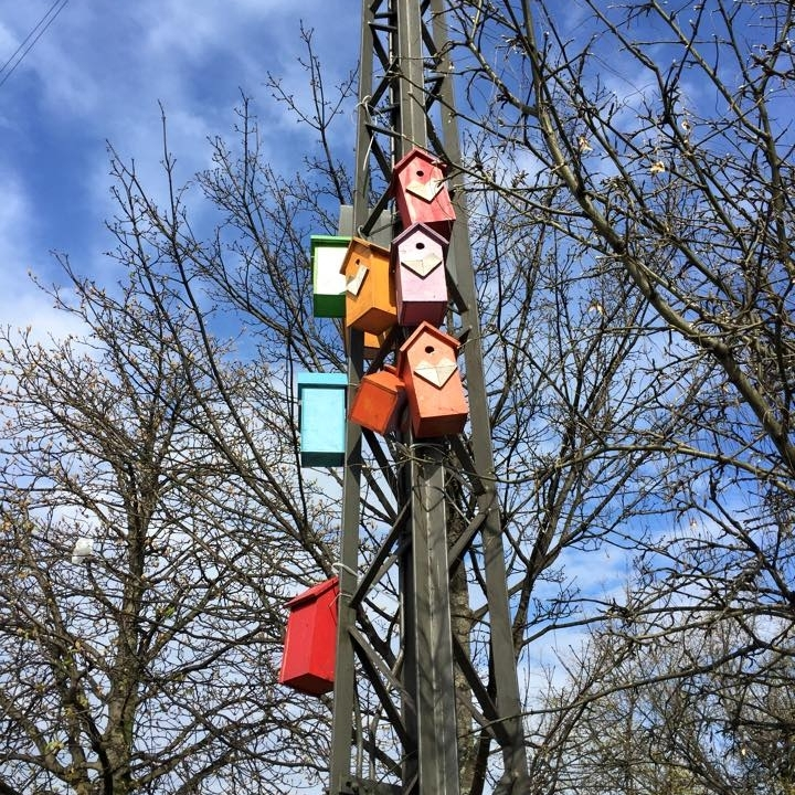 Colourful bird houses enliven the barren trees nearby.