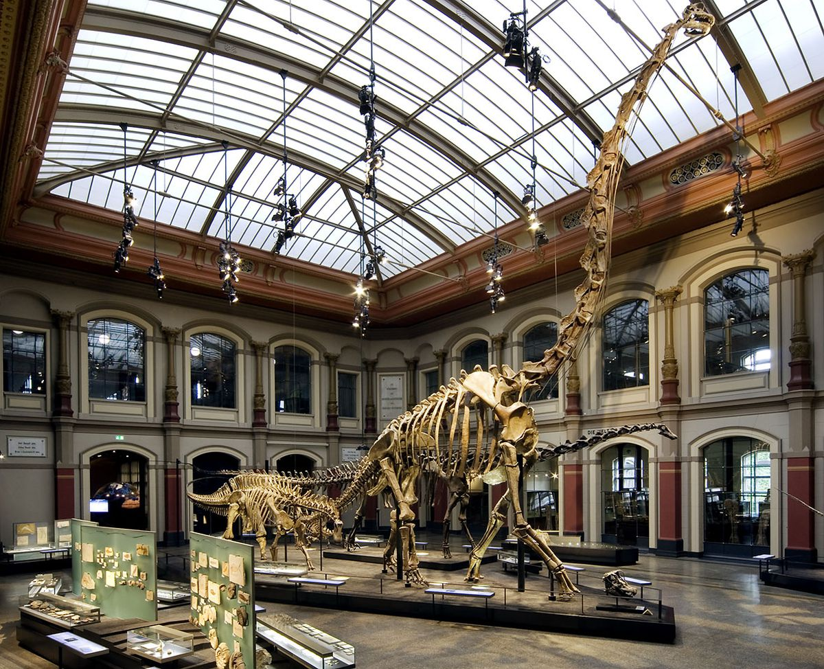 brachiosaurus.jpg_cms_image.jpg