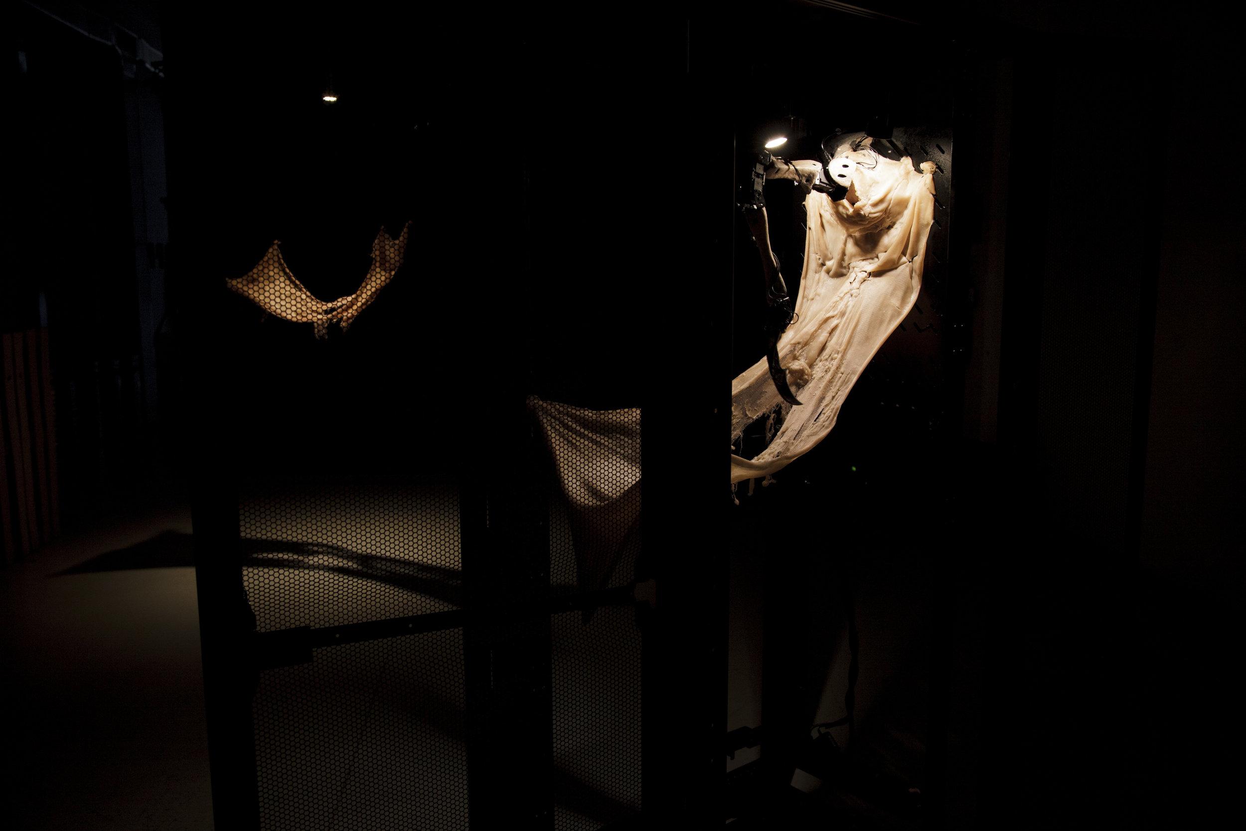 Amygdala - Marco Donnarumma (c)Photo courtesy of the artist (1).JPG