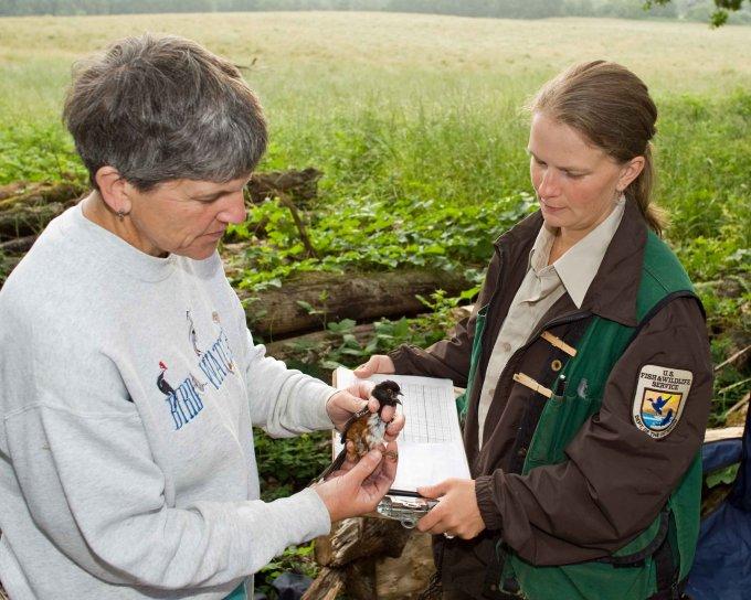 biologist-working-on-bird-banding-680x544.jpg