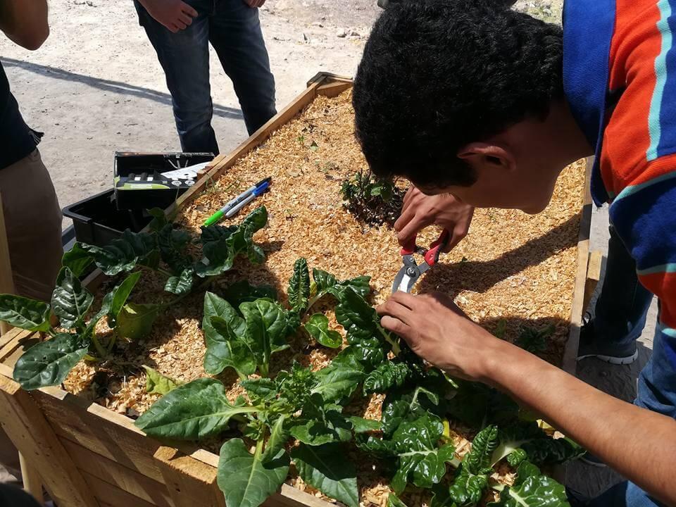 Redescubriendo los jardines escolares1.jpg