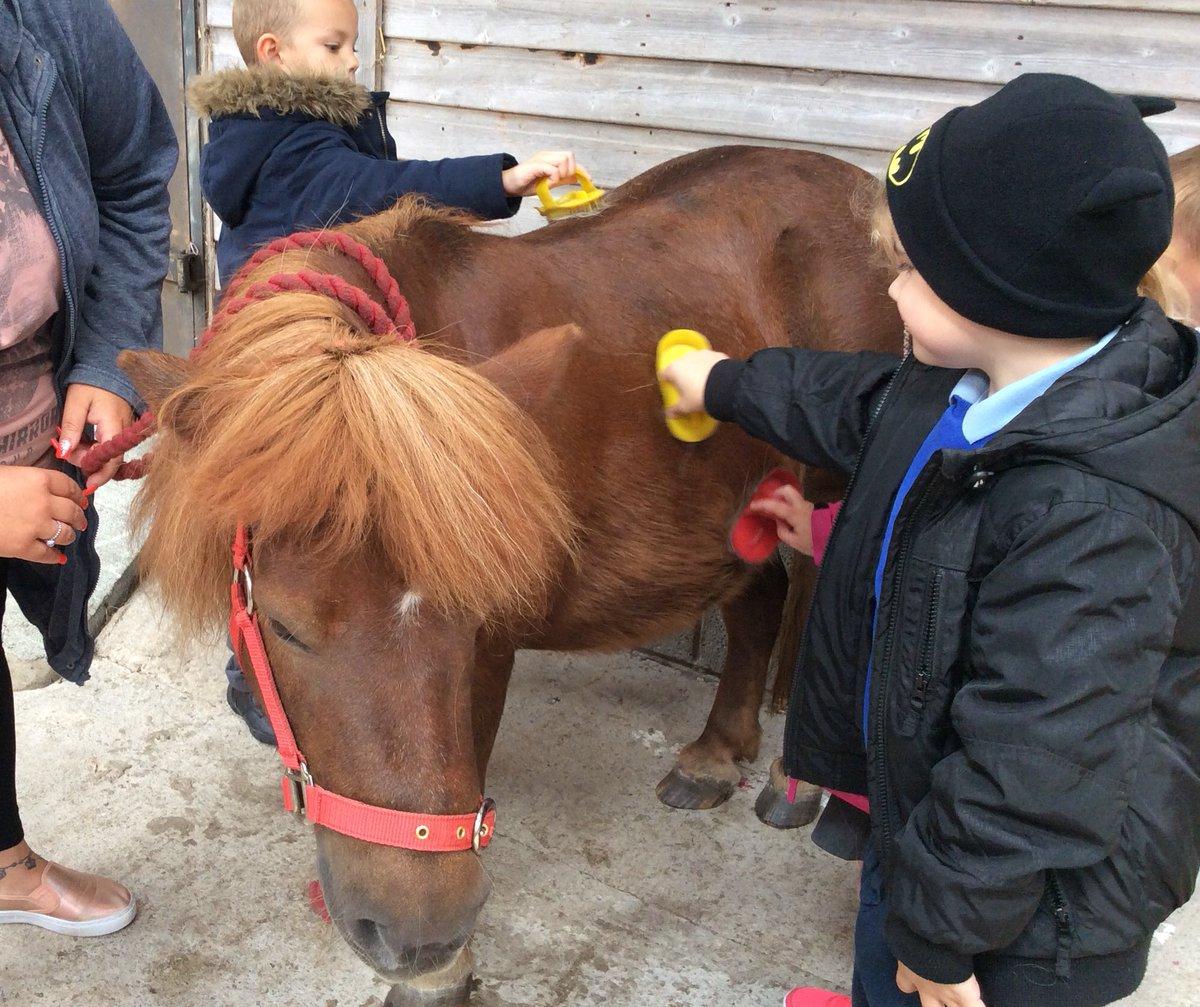 pony grooming.jpg