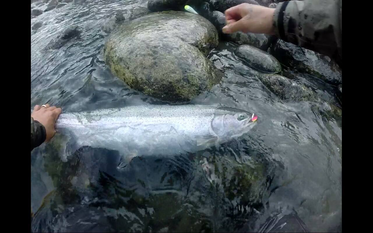 Colorados hard at work catching fish.