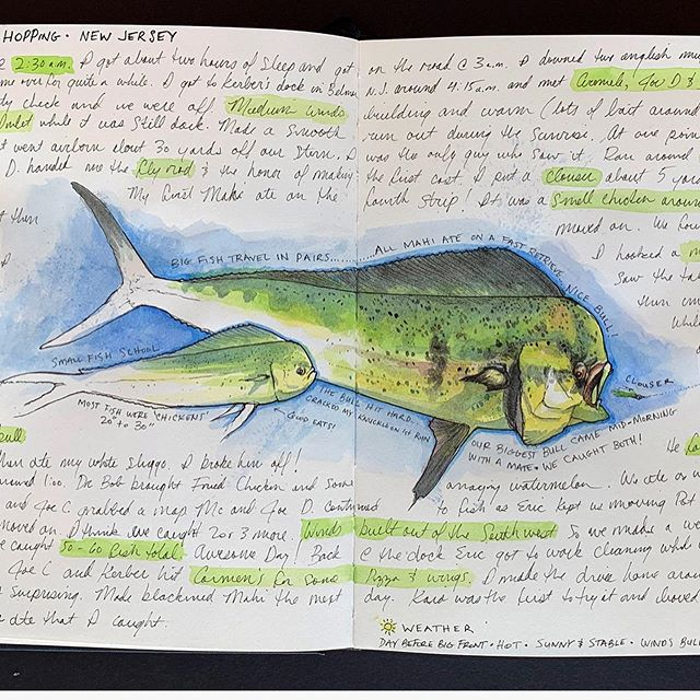 Catching up on a few fishing log/sketchbook pages. Here's an entry from a trip a few weeks ago, New Jersey pot-hopping for Mahi on the fly and spin with @onamissionfishing @flyfishthedelaware and @fieldandstream  The fish were hungry that day and Capt Kerber kept us on them. #mahimahi #mahionthefly #flyfishing #offshorefishing #fishingart #sketchbook #ink #watercolor