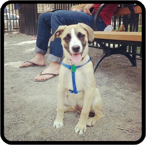 puppy-classes-in-bushwick.png