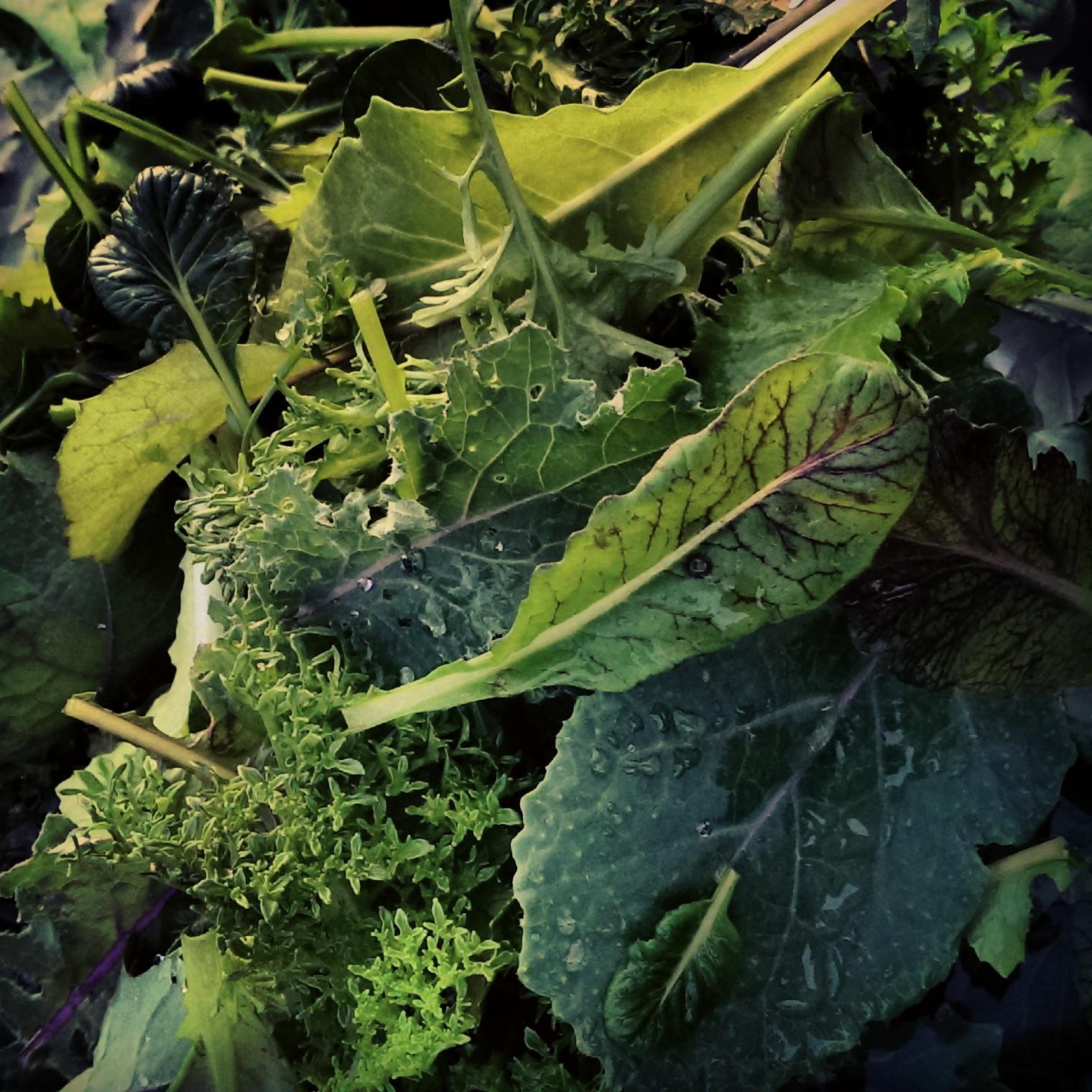 Bitter Harvest Greens