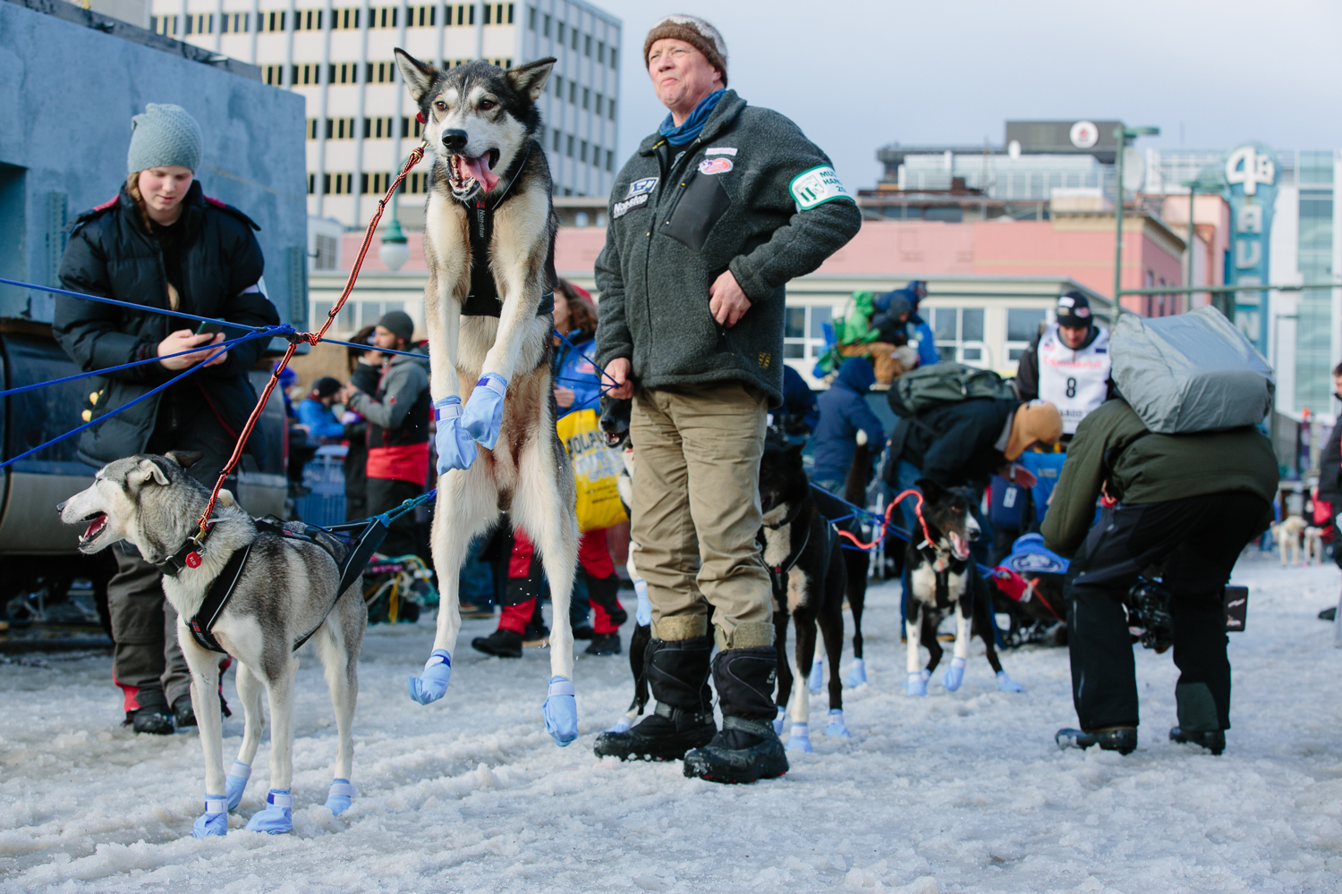 Dogs of musher Thomas Waerner of Norway (bib #8) leap excitedly in the air waiting for their turn to start down fourth avenue in downtown Anchorage Alaska on March 7, 2015.