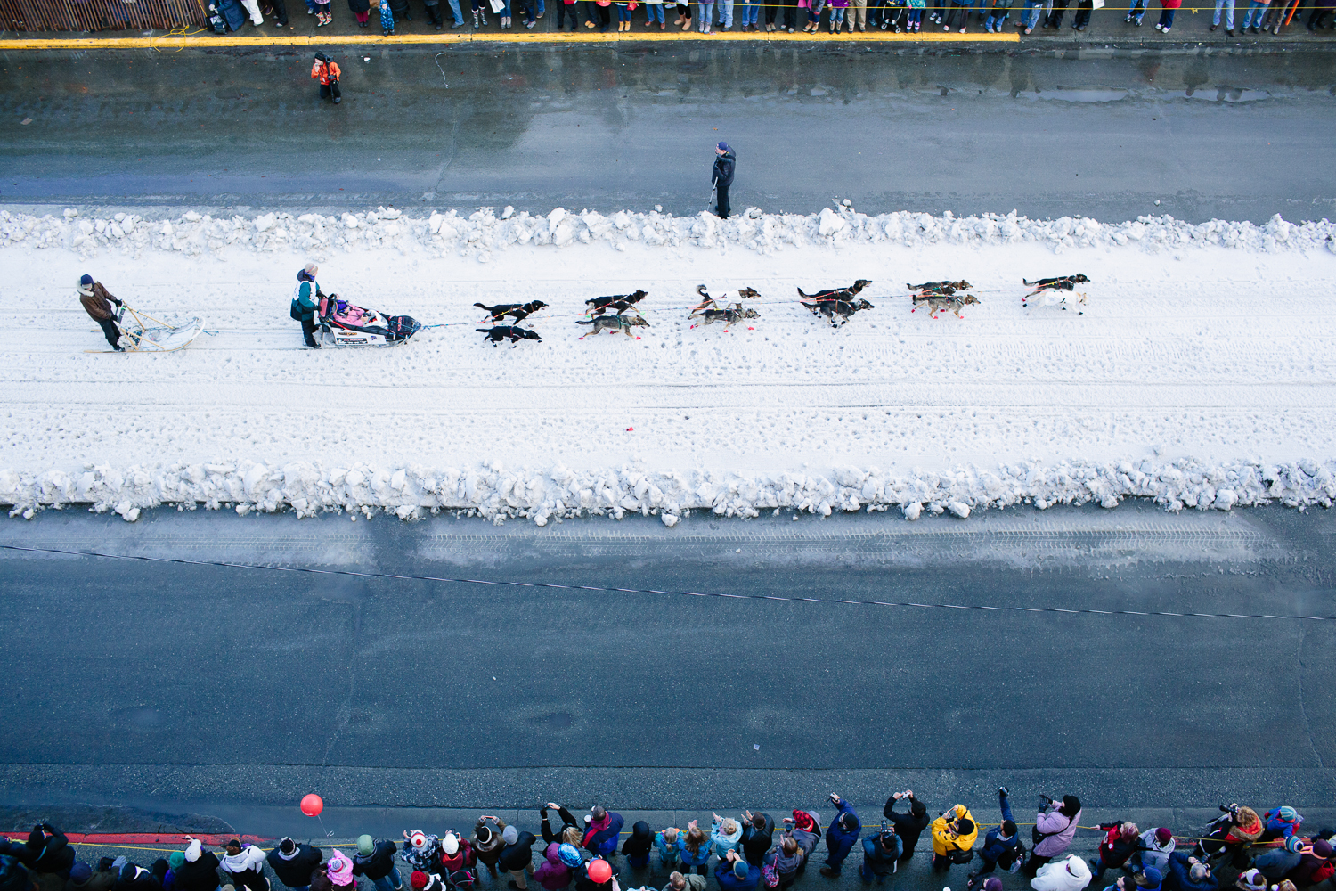 Jodi Bailey of Fairbanks mushes down Fourth Avenue in Anchorage Alaska at the Iditarod's Ceremonial Start on March 7, 2015. Snow was brought in by trucks to accomodate the race due to lack of snowfall.