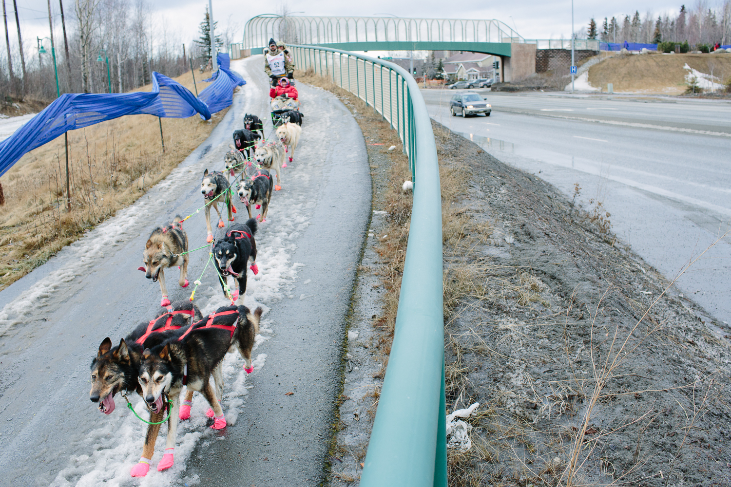 Bib 52, musher Rick Casillo and his dog team mushed over minimal snow next to Tudor Road in Anchorage Alaska during the Ceremonial Start of the 2015 Iditarod.
