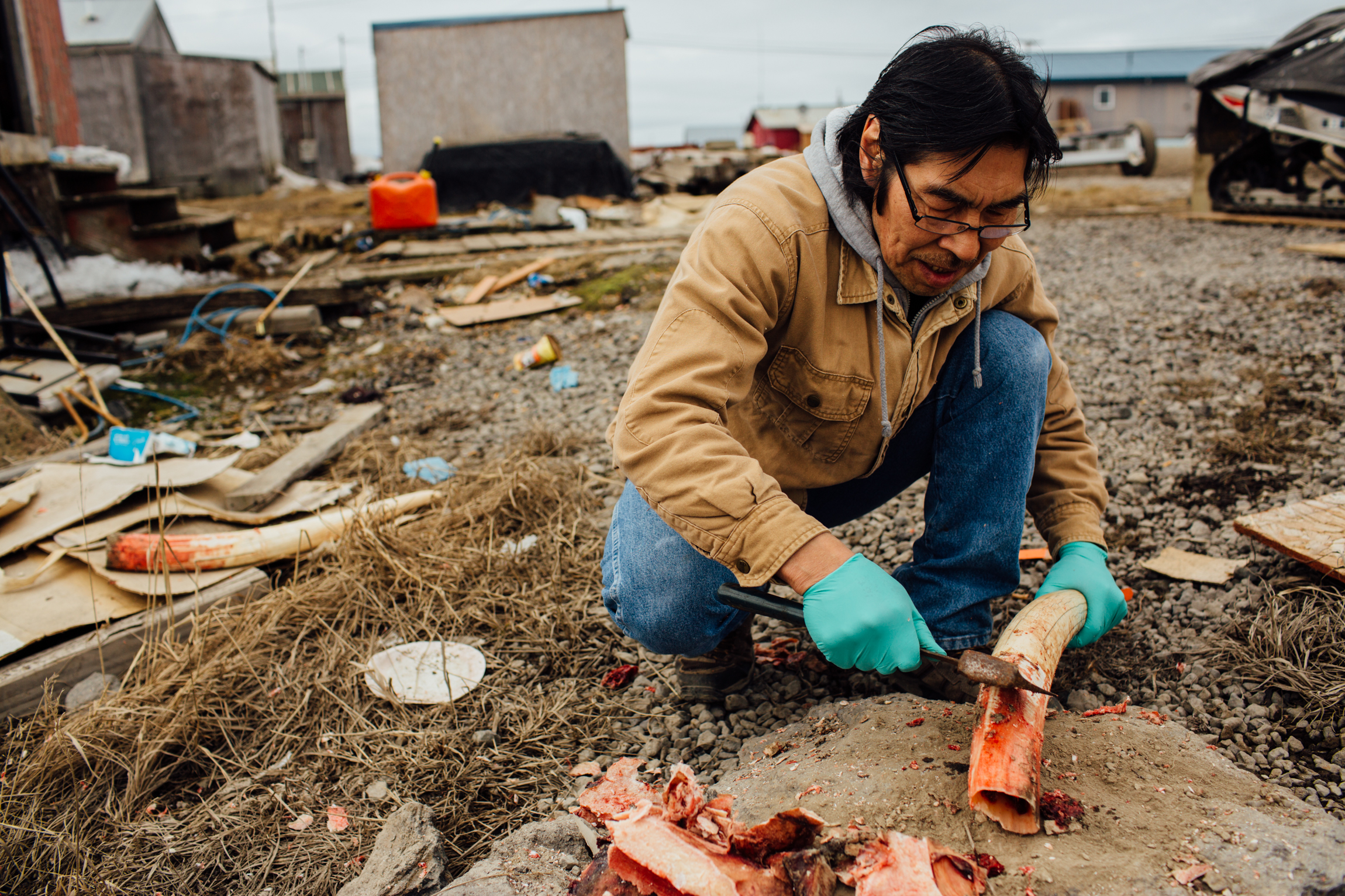 Ben Pungyawiyi cleans a walrus tusk, preparing it for carving. Savoonga, St. Lawrence Island, Alaska.