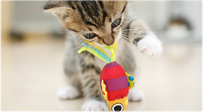 getty_rf_photo_of_kitten_playing_with_toy.jpg