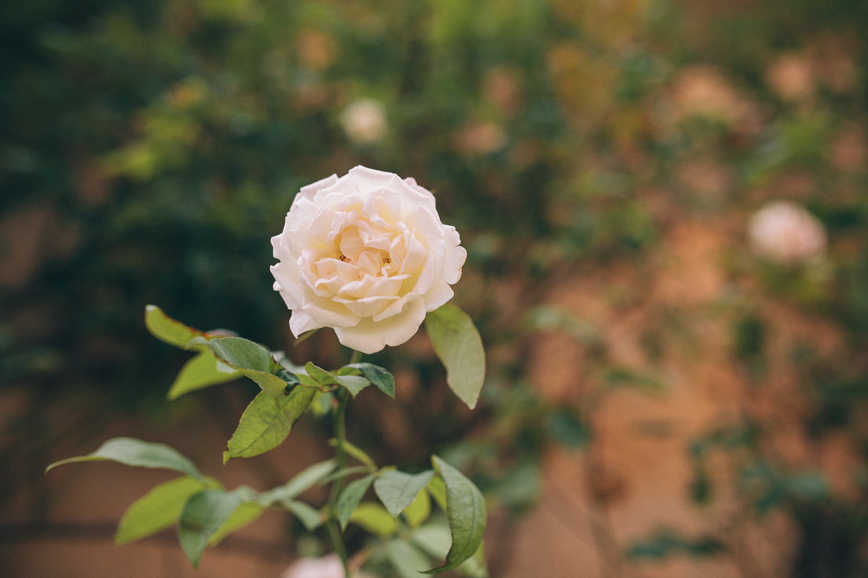 tuscan wedding italy wedding-8.jpg