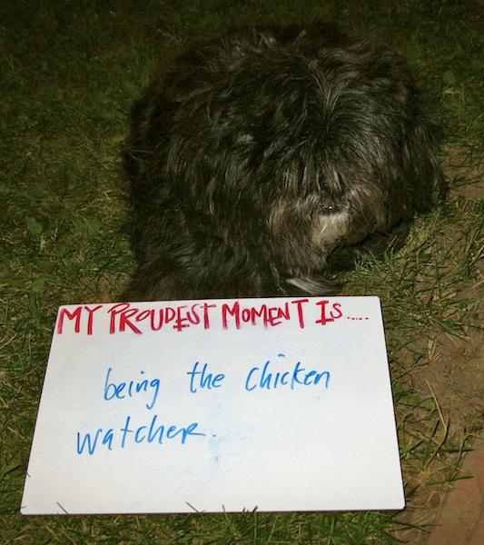 chicken-watcher-Proudest-moment.jpg