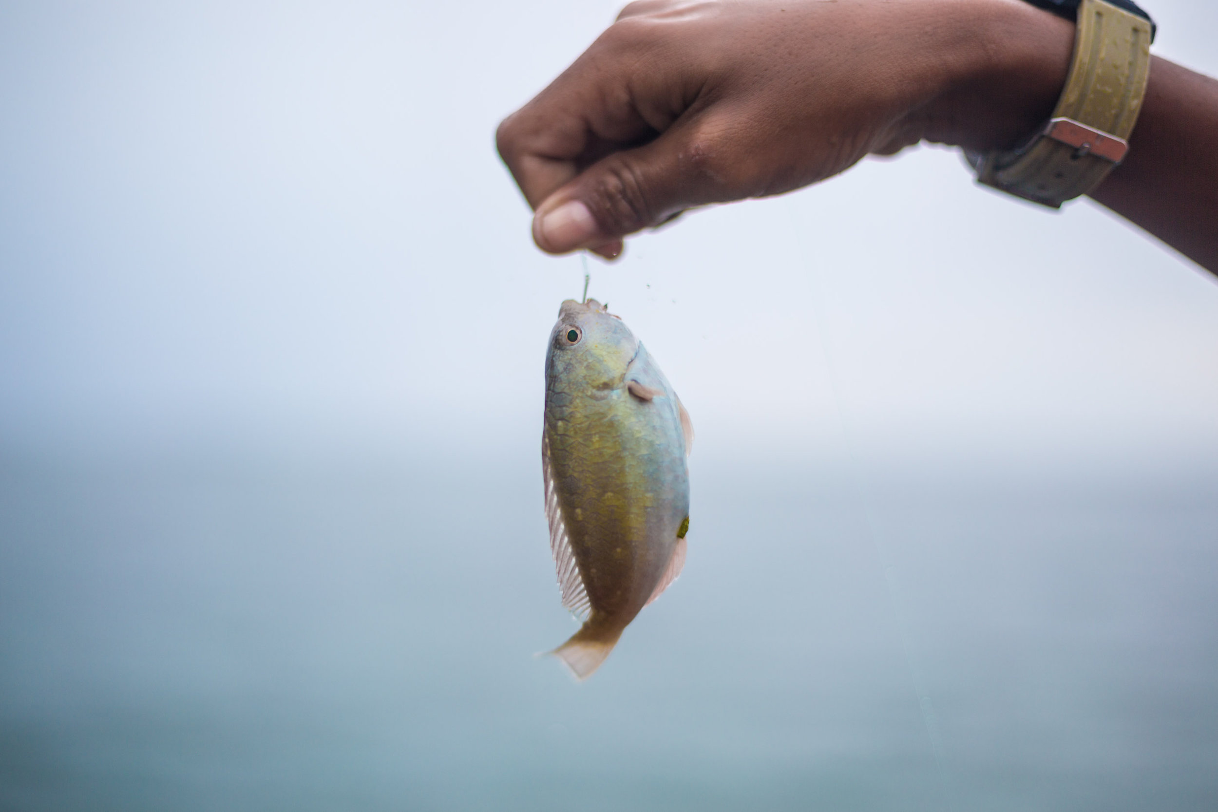 fishing-OCT21-17_16eb_00-8.JPG