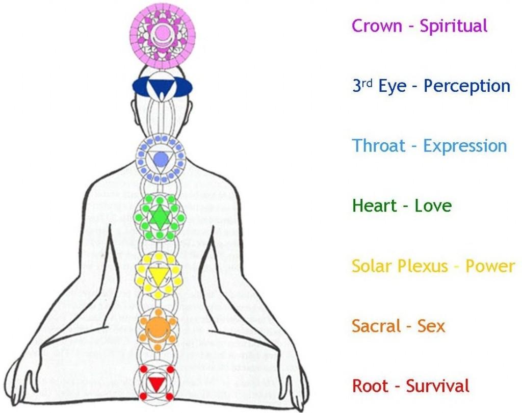 The seven main chakras of the human body