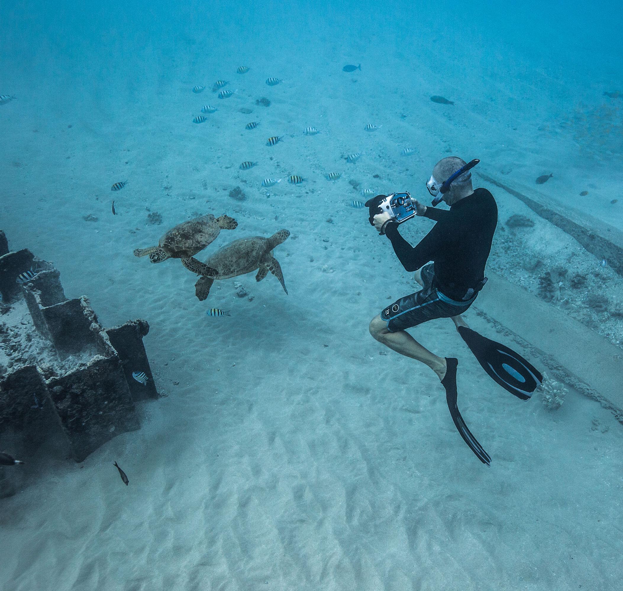Photographing green sea turtles in Hawaii.