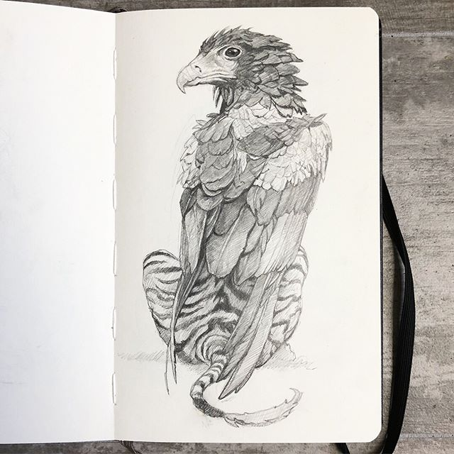 STUDY |  Bateleur Griffin, Graphite on Moleskine paper. Got a chance to see a see a Bateleur Eagle while out at The @sandiegozoo Such a majestic animal.  Not so lucky with the tigers couldn't get any good pics but still an amazing zoo. 🦅🐅 . . . This series has been such a joy to create, my love of fantastical beasts and being able to reimagine them as real creatures that have adapted to there geographic location is a huge part of my inspiration. Being half Greek mythology has played a major part of my upbringing and I really wanted to do something fun and intriguing with this hybrid of Eagle and Lion. Essentially I researched various types of Eagles and wild cats from all over the world that I believe would produce a very reasonable and aesthetically pleasing creature. That in combination with what @montymontgomery would eventually contribute to the finished piece is such an exciting vocation for our new work! I hope you enjoy looking at them as it was creating them! . . . @sparksgallery @moleskine_arts @rotringofficial @gaslampquarter @kaleidoskullart #tonyphilippou #montymontgomery #sparksgallerysd #sandiegozoo #griffin #bateleureagle #tiger #creature #anthropomorphic #hybrid #collaboration #moleskine #drawing #study #rotring600 #graphite