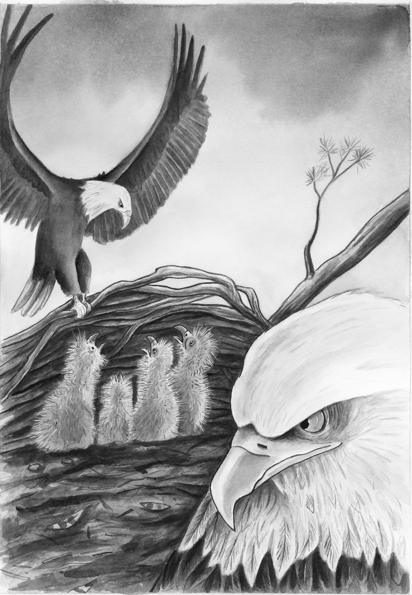 16_Eagles Nest_ed_size copy.jpg
