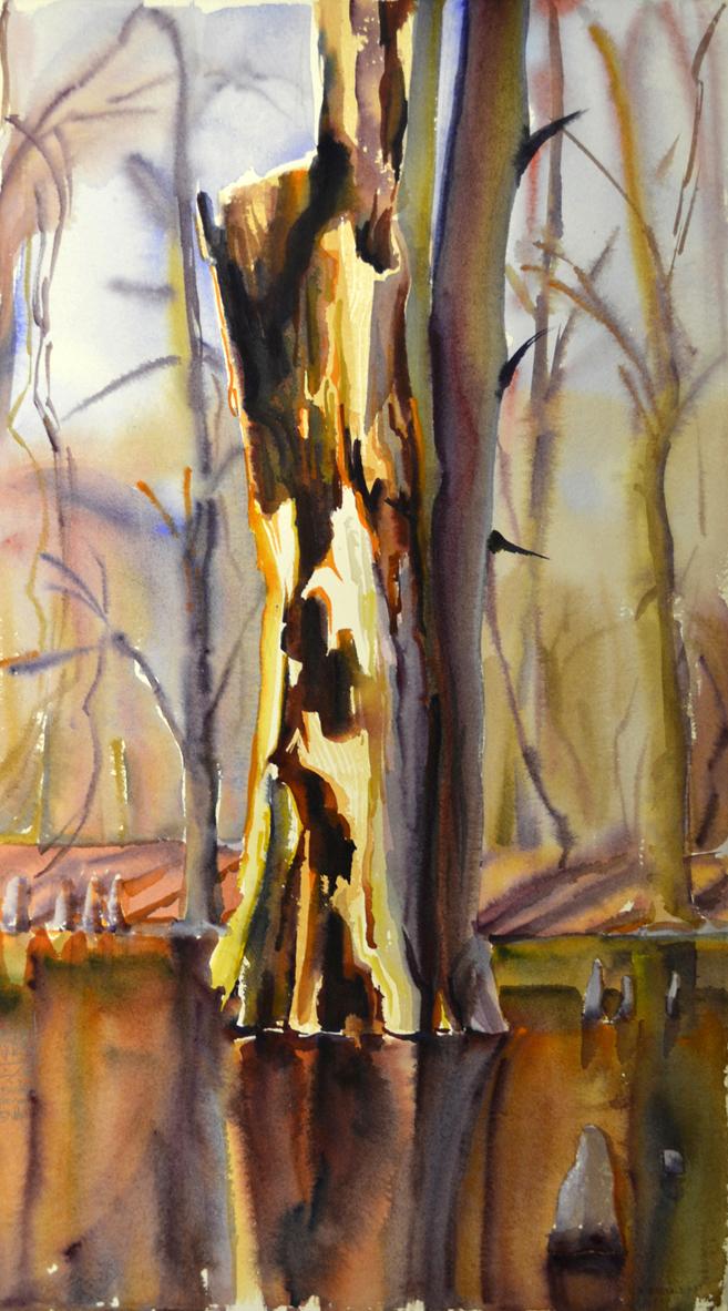 Bald Cypress rot / Chakchiuma Swamp / March