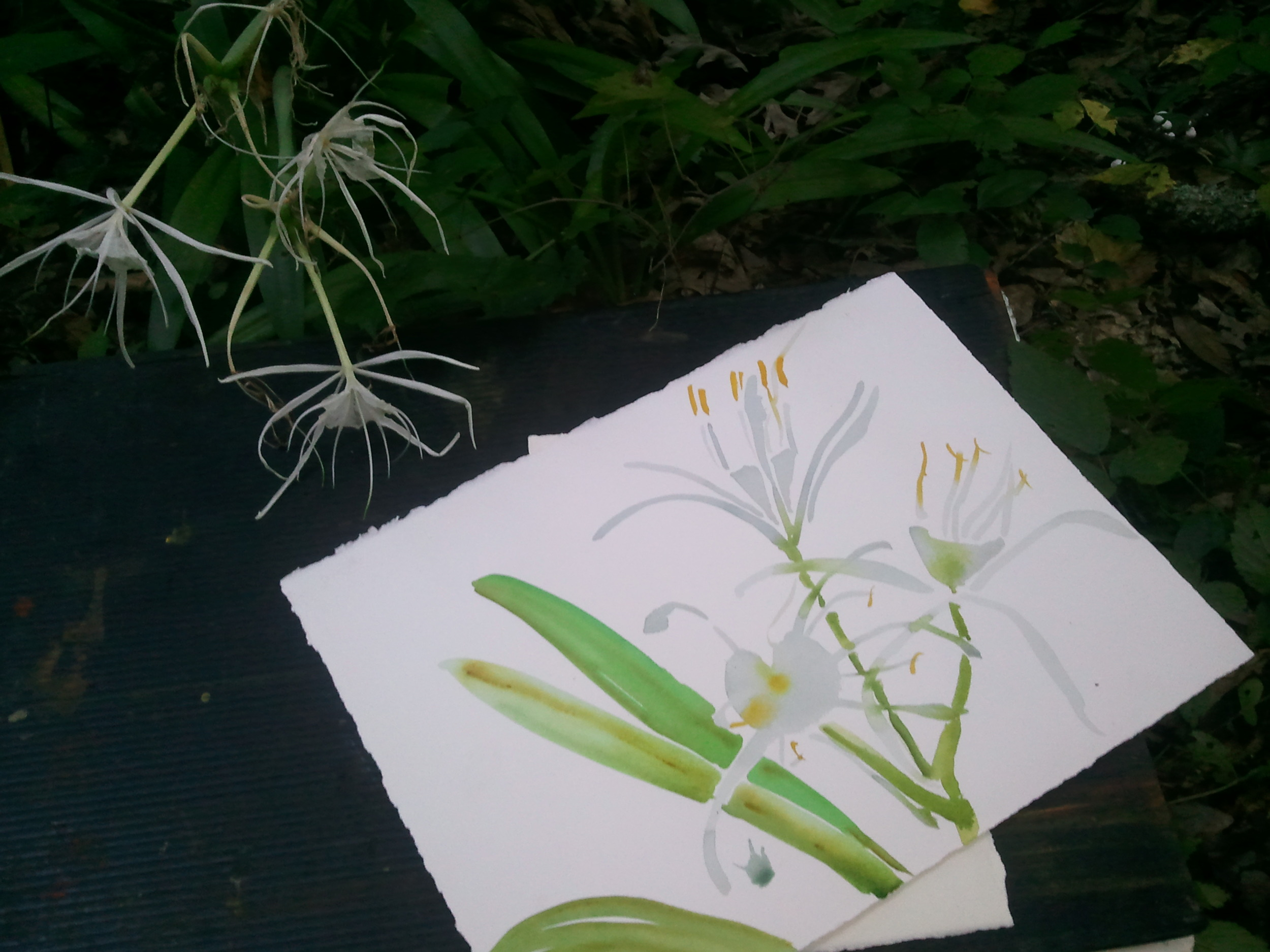 6:30 pm lily sketch