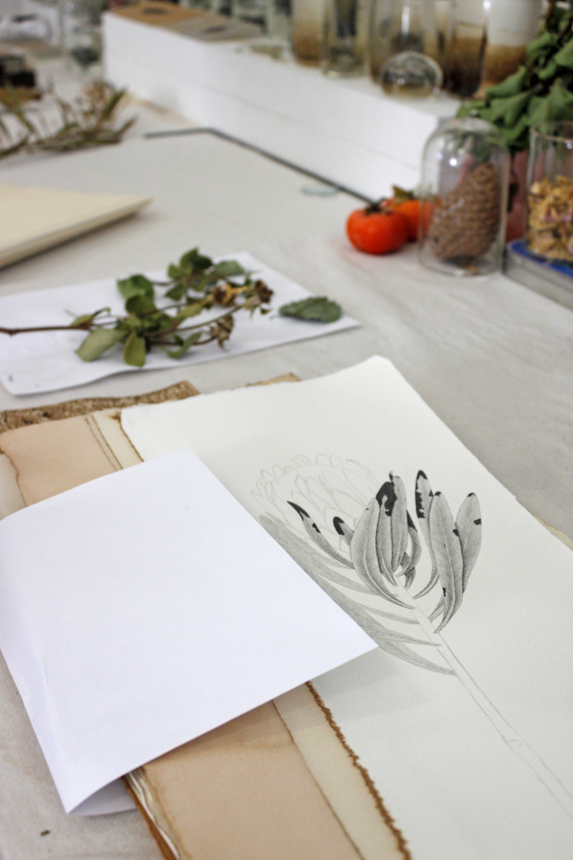 One of Emilie's drawings of a Protea.