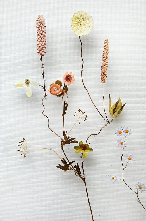 Anna ten Donkelaar , Flower Construction #64 (Detail)