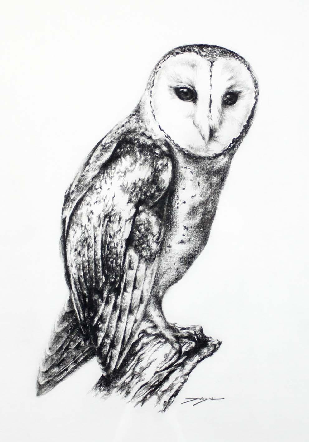 Jahne Meyer,  Masked Owl , oil charcoal on paper