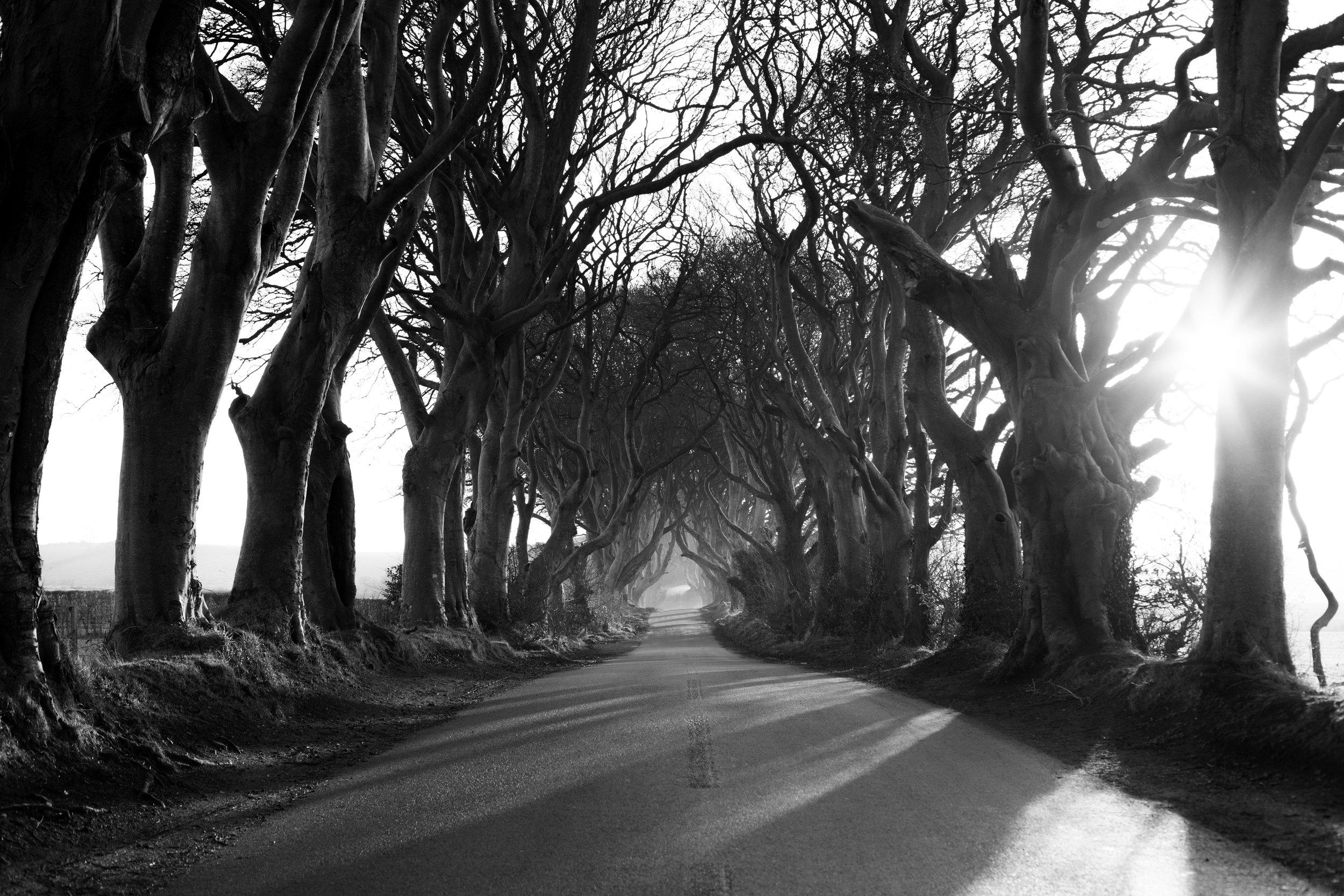 The Dark Hedges - Belfast