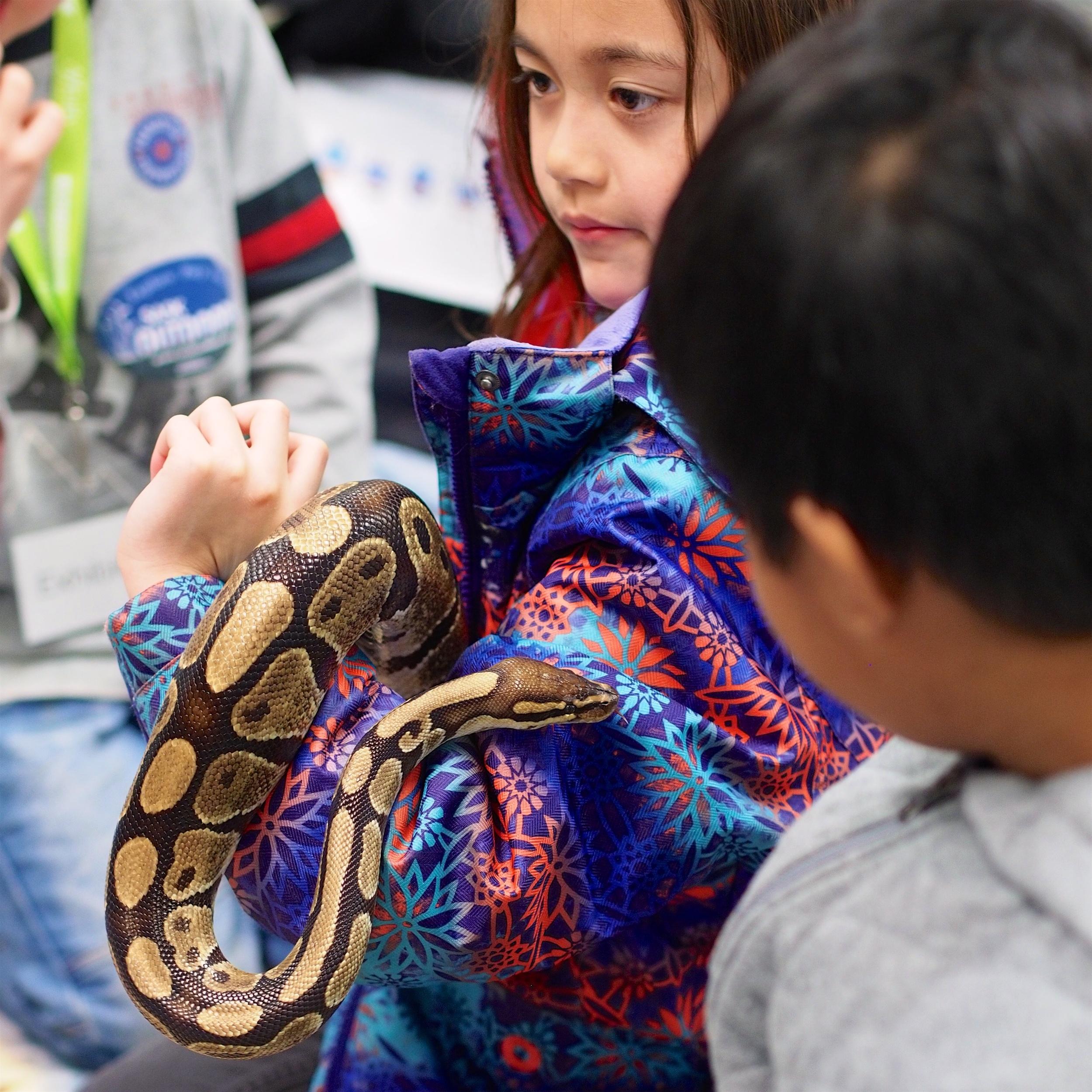 python 10.jpg
