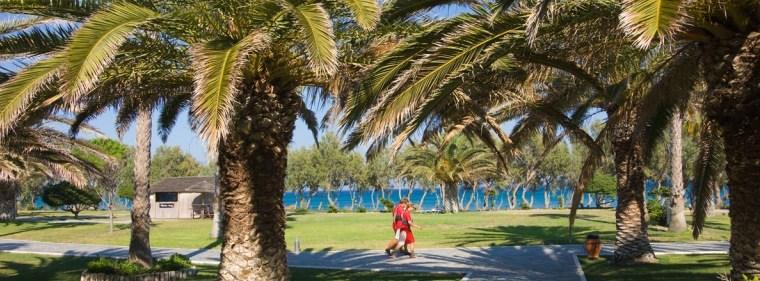 laki-palm-large.jpg