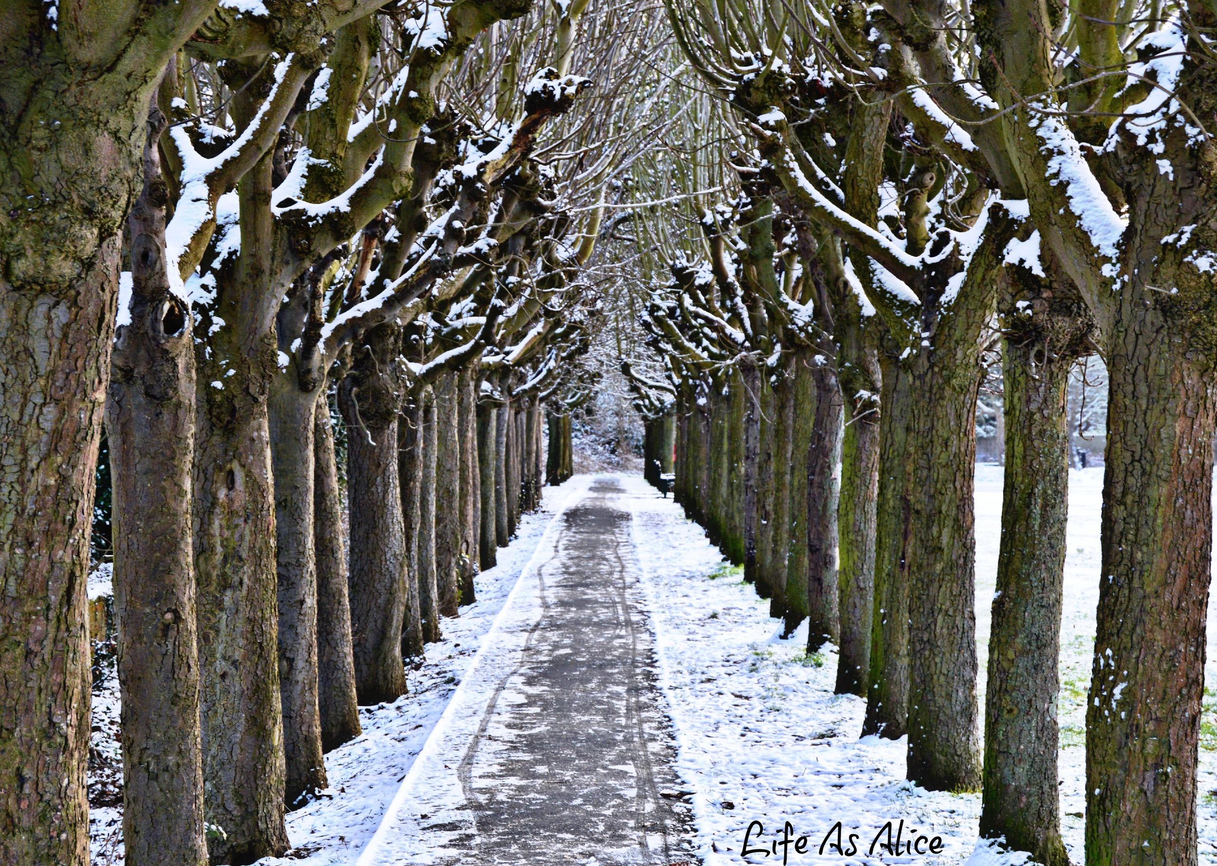 Trees snow path.jpg