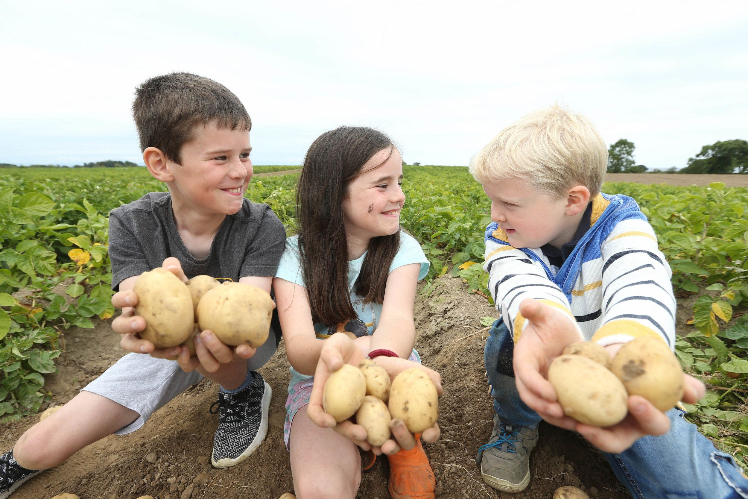 (l-r) Twins Evan and Abbie Wogan (8) with friend David Tuite (8) on the Tuite family farm in Clogherhead, Co. Louth