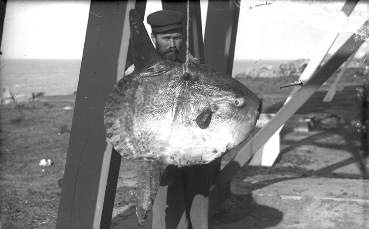 Man in peaked cap holds sunfish (mola) at Lovers Point.