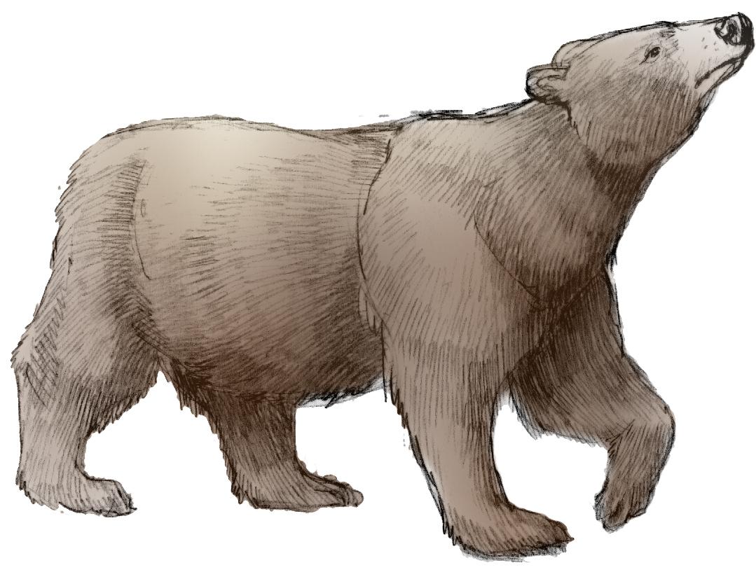 'Black Bear' by Erin E. Hunter