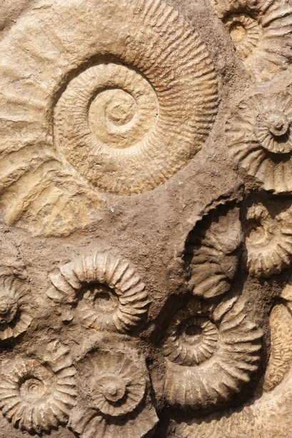 Science Saturday returns August 29th with fossils!