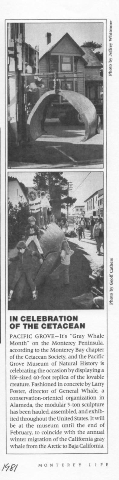 01-00-81 In Celebration of the Cetacean MOnterey Life  p 24 2 copy.jpg