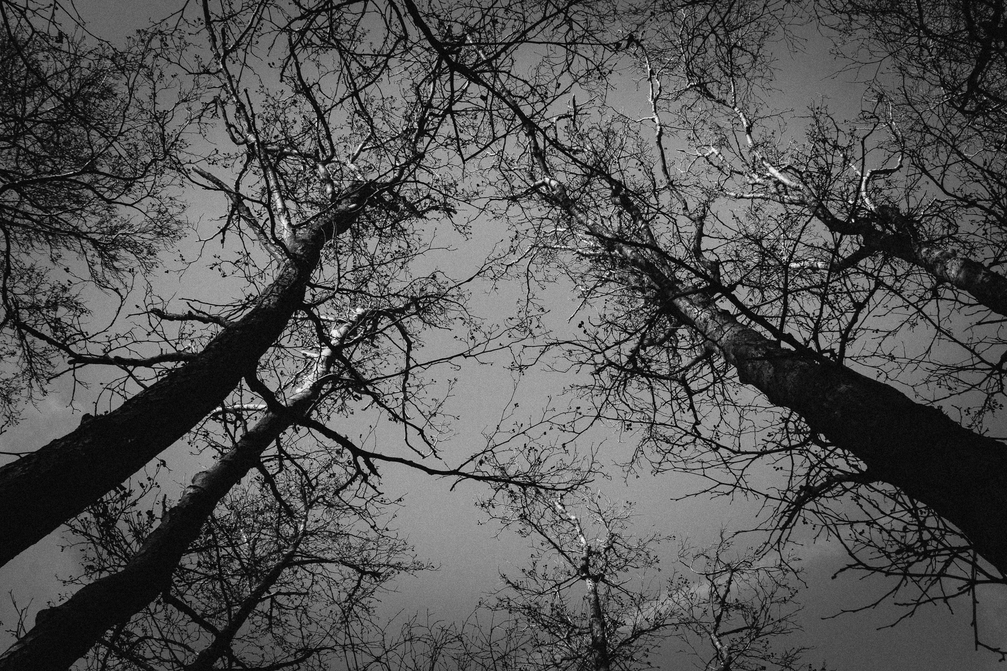 blood-vessel-trees-sky-bw (1 of 1).jpg