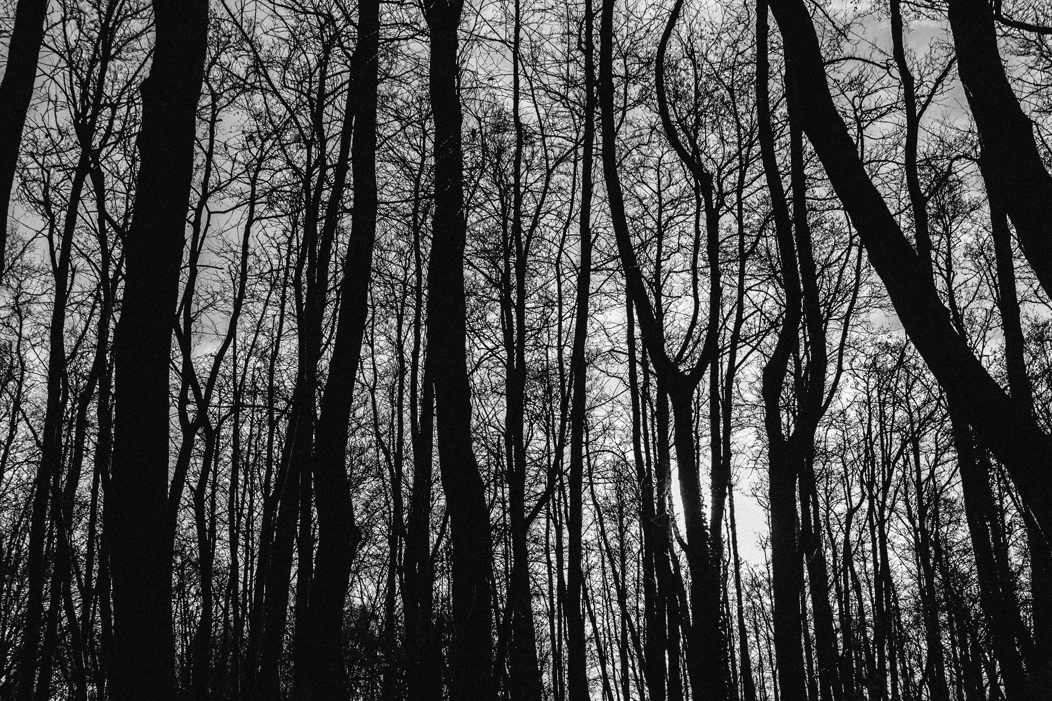 blood-vessel-trees-bw (1 of 1).jpg
