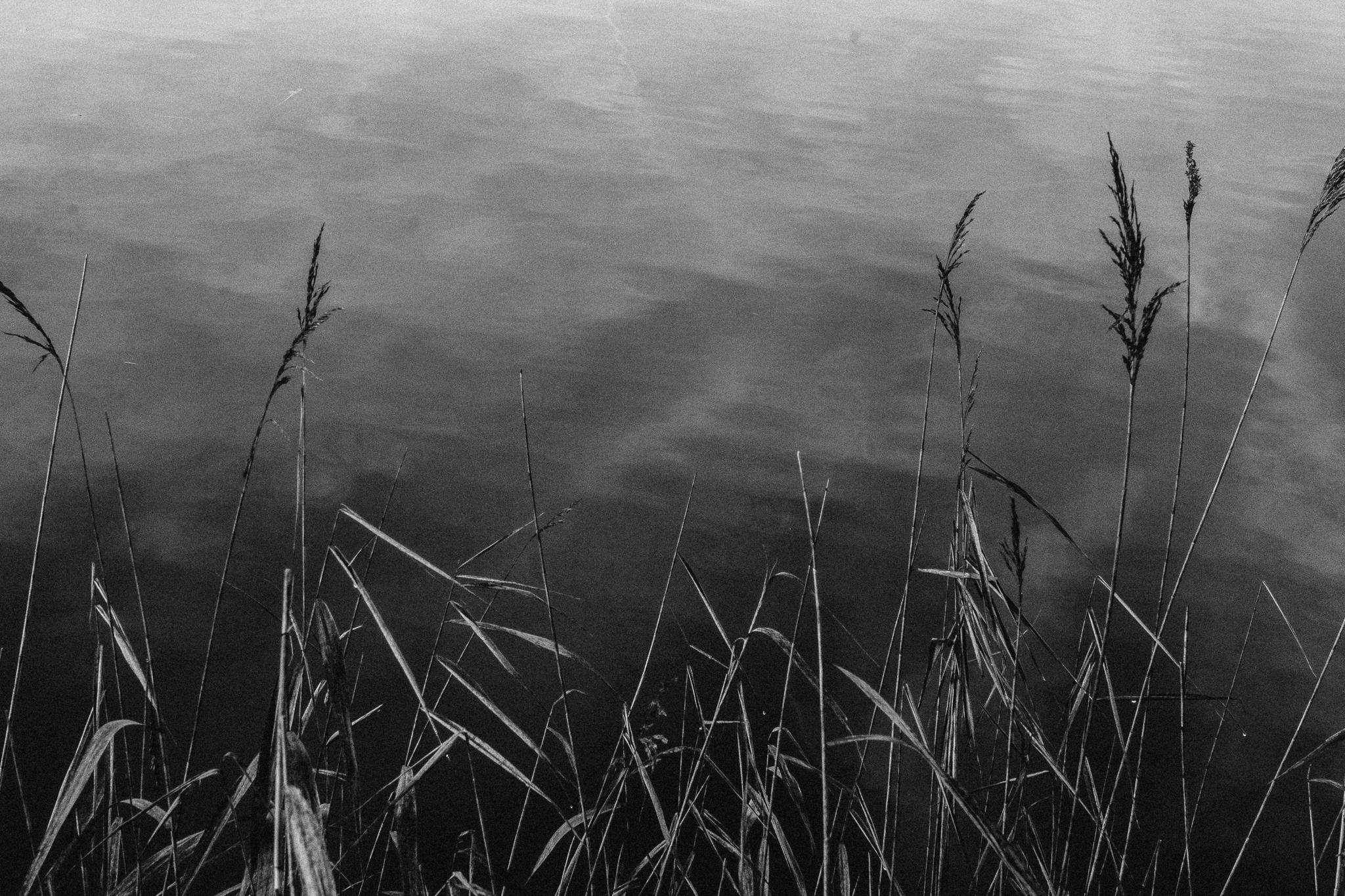 reeds-hide-bw (1 of 1).jpg