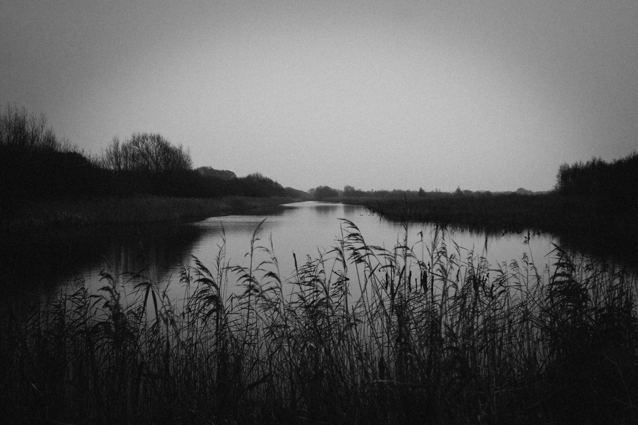 reeds-bw (1 of 1).jpg
