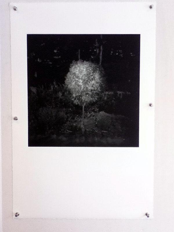 how_to_photogravure_print_stig_stasig_17